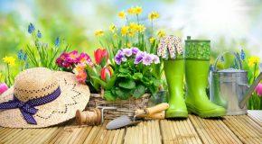 Les enquêtes en jardineries